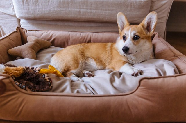 Best dog beds 2021: stylish, comfortable dog beds for kinds of dogs, and every owner's budget