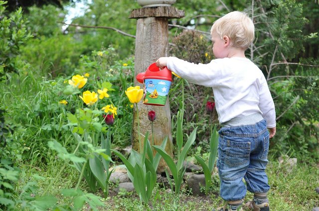 10 Easy gardening hacks you need to know during Covid lockdown.