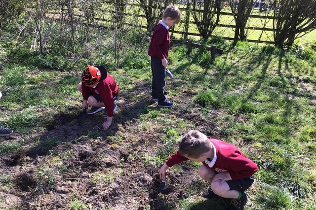 Children at St Bartholomew's Primary School planting in their nature area.