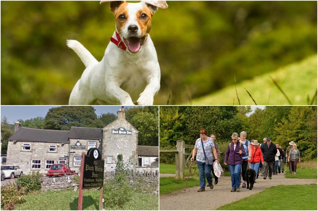 Where will you take your dog for a day out in Derbyshire? Main photo in montage: Shutterstock/Ammit Jack.