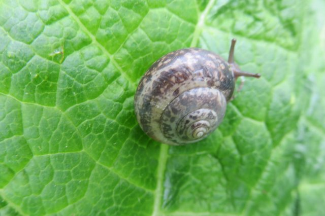 Irene Gilsenan captured this incredible close-up of a snail sat munching on a leaf in Bradwell Dale.