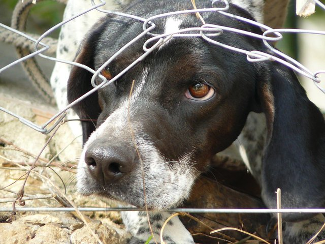 The RSPCA have been called to 1,943 reports of intentional animal cruelty in Derbyshire since 2016